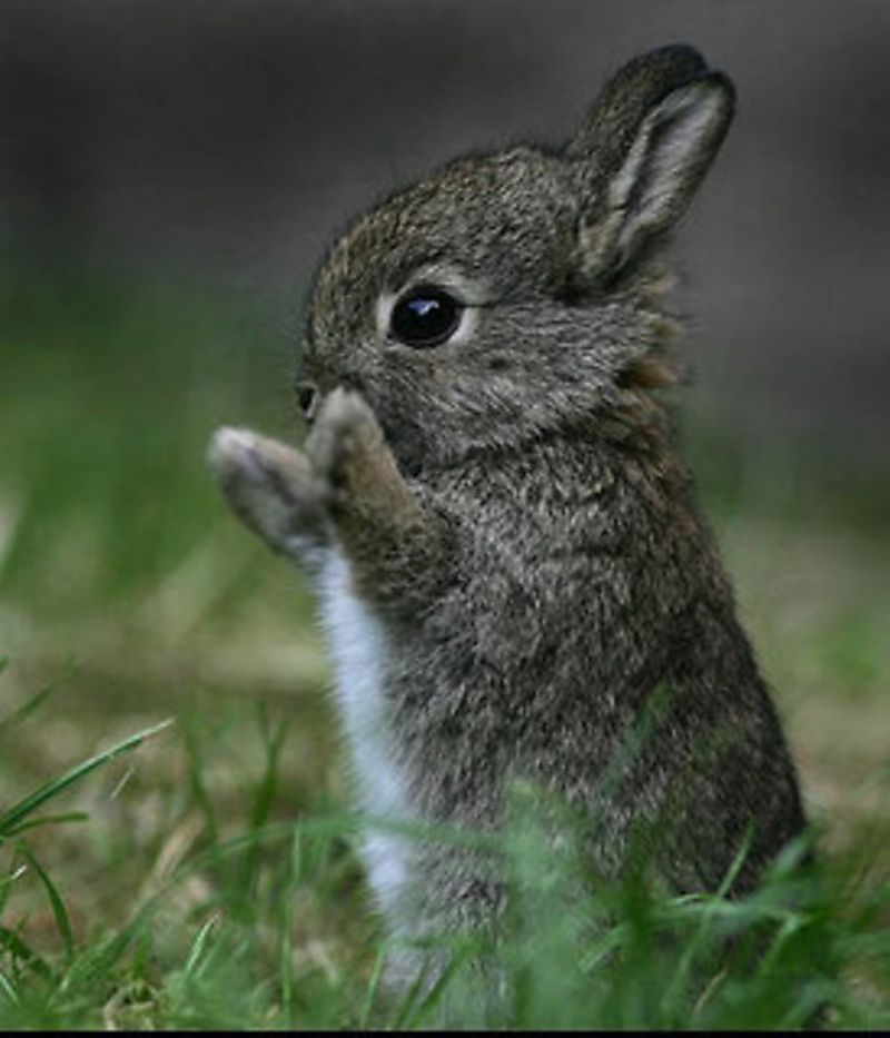 It's a baby bunny who is seems to be clapping? This is inarguably good. Keep reading.