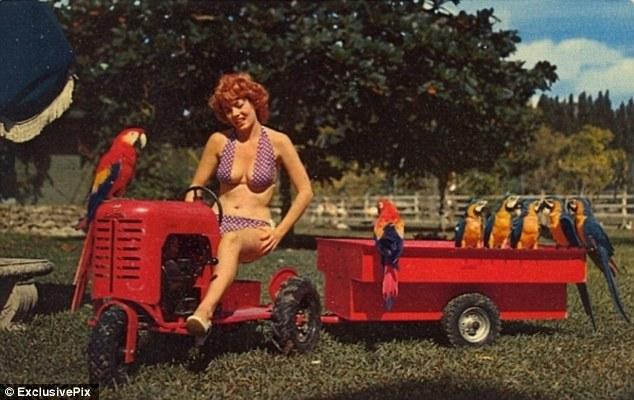 Attractive Florida woman pulling parrots. Postcard, circa 1950.